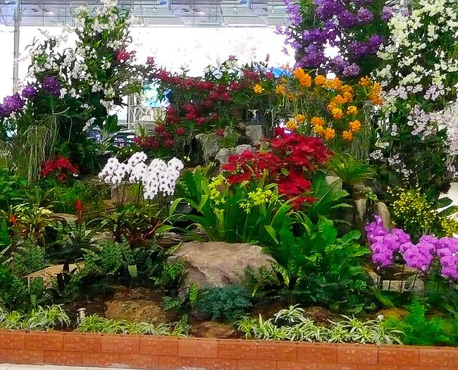 Banner -  Como Cuidar de Orquídeas